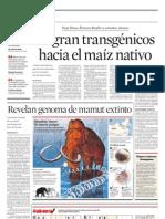 Migran transgénicos hacia el maíz nativo