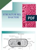 Struktur Sel Bakteri 1