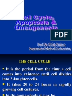 cell cycle,apoptosis,oncogenesis