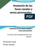 fosas_nasales_2010