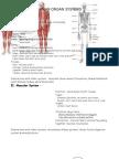 III 2 b Body Systems