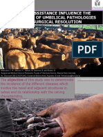Calving Assistance Influence the Occurrence of Umbilical Pathologies With Surgical Resolution 2