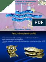 Ribossomos- Reticulo Endoplasmatico- Sintese Proteica