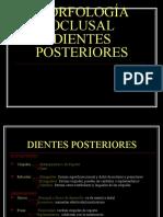 Morfologia Oclusal en Posteriores Dra Claudia Restrepo[1]