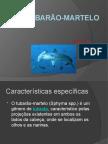 _Tubarão-martelo.pptx_