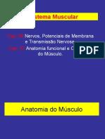 Unidade Neuromuscular