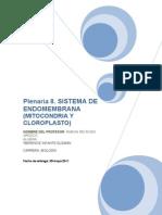 plenaria 8