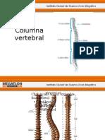 Columna Vertebral - Clase 3