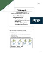 Slides Lecture11 DNA Repair