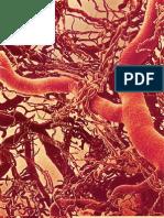 Artigoaterosclerosefapesp