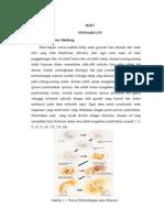 Perkembangan embrio manusia