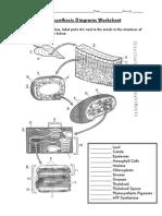 Photosynthesis Diagrams Worksheet