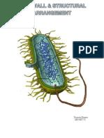 cell_bio