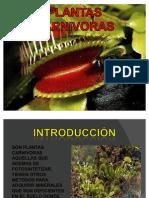 PLANTAS CARNIVORAS GENERALIDADES