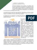 Colesterol y Lipoproteína1