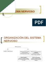 Sistema Nervioso Central Embriologia