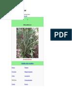 familia Bromeliaceae