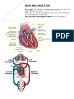 Heart and Circulation