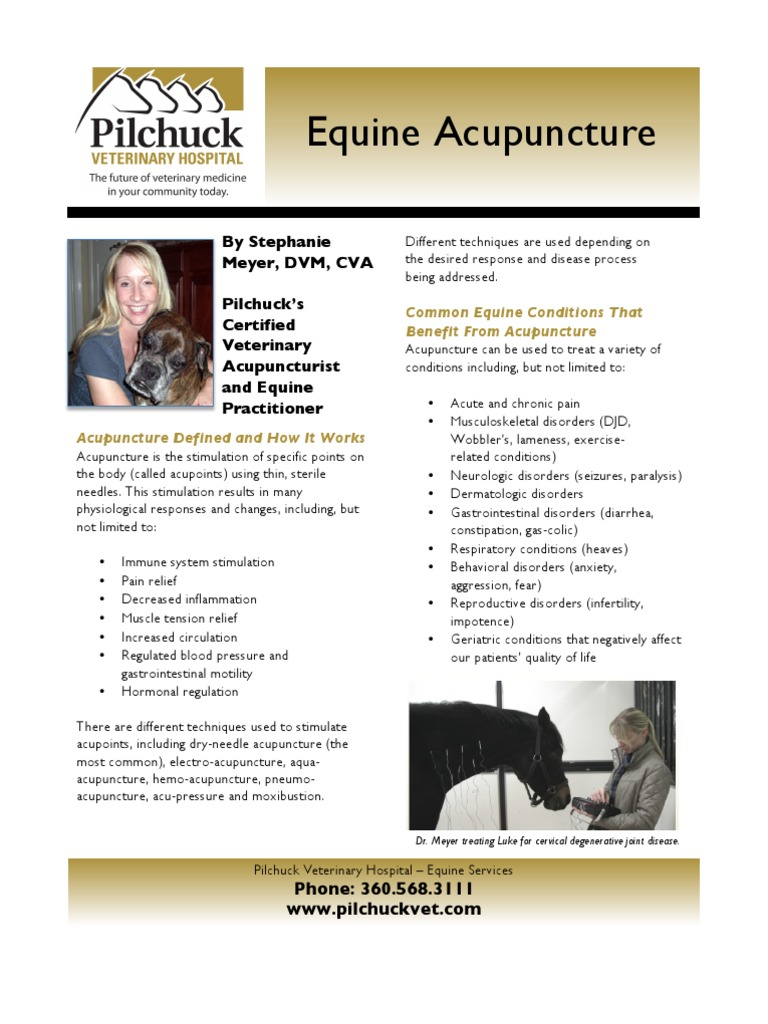 Pc 110428 equine acupuncture flyer final acupuncture pc 110428 equine acupuncture flyer final acupuncture traditional chinese medicine 1betcityfo Images