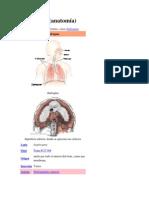 diagragma
