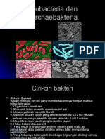 Eubacteria Dan Archaebakteria