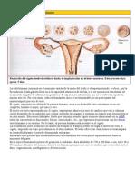 Fecundación y desarrollo embrionario  orientación 2011