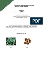 Aqua Chestnut Paper