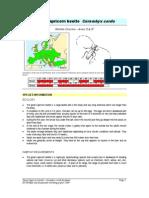 Cerambyx Cerdo Factsheet - SWIFI