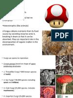 Fungi Monera Protists Plants