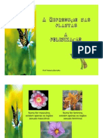 reproduçãodas plantas