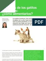 11 Cuidados de los gatitos huérfanos