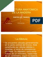 Estructura Anatomica de La Madera