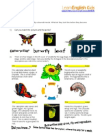 Butterfly Life Cycle Activity 1