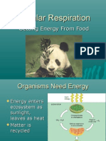 Notes Respiration 2010