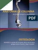 Anatomia de La Columna