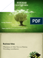 Olive Business Plan