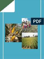 MAIZ_AMARILLO_DURO_totales[1]