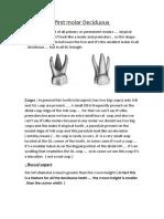 Maxillary First Molar Deciduous