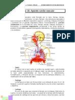 T19 - Ap respiratorio