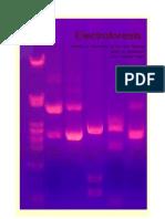 electroforesis LuciaGallardo