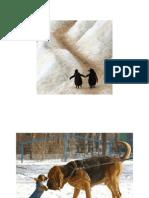 Animal Photograph Slideshow