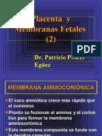 16 Placenta y Membranas Fetales (2)