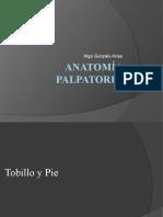 clase 1 Anatomía Palpatoria