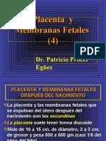 18 Placenta y Membranas Fetales (4)