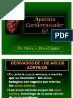 33 Aparato Cardiovascular (5)