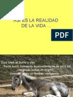 Asi Es La Realidad-1900