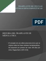 trasplante medulao