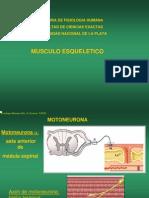 musculoesqueletico