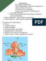 angiopermas