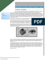Anatomia Do Olho Humano2